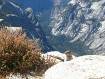 Went to Yosemite National Park---at the top of Clouds Rest I was greeted by a friendly squirrel x