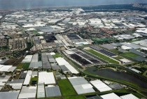 Westland The Netherlands a glass city the size of Manhattan filled with greenhouse horticulture and the largest flower auction house in the world