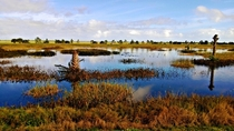 Wetlands Florida