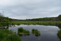 Wetlands of North Manitou Island MI