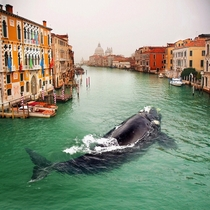 Whale in Venice