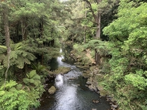 Whangarei Falls New Zealand The stream leading away from the falls looks stunning