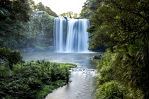 Whangarei Falls Northland New Zealand