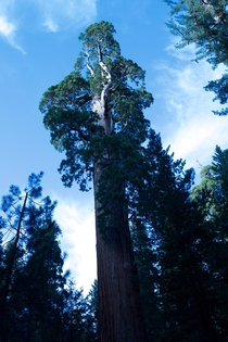 What makes you feel really small In CA Sequoia National Park