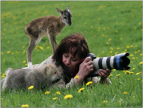 Whatcha doin lady A professional photographer out in the field is approached by both a wolf cub and a fawn