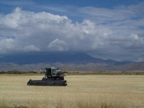 Wheat Harvester Camas County Idaho