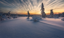 When clouds cooperate during sunrise and only a hare beat you to this spot in the white landscape winter in Kongsberg Norway