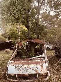 When nature takes over - this car has been there so long a whole tree has grown through it