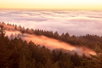 When Sneaky Fog enters between the trees of Mill Valley Mt Tamalpais State Park California