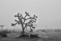 When the fog settles in Joshua Tree National Park