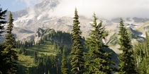 Where the treeline ends and the rugged peak of Mount Rainier begins