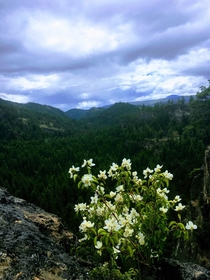 Where the wild flowers grew Cougar Canyon Canada