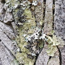 Who loves the different textures of lichen