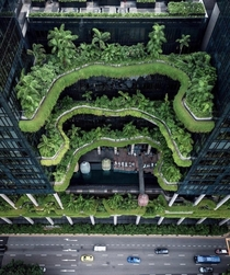 Who said cities need to be concrete jungles