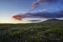 Wild flowers at dusk beneath mountain Cincar in Bosnia Glad to be back home