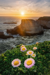 Wild flowers bloom on the California Coast marking the onset of a rather colorful spring