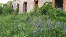 Wild flowers have replaced the boots at this abandoned military building