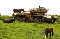 Wild horses gaze next to an abandoned Israeli Centurion tank Shot left behind on the Golan Heights after the Battle of the Valley of Tears during the Yom Kippur War in