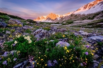 Wildflower Garden Sunrise Snowy Range Wyoming