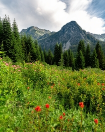 Wildflower meadows in Washington State