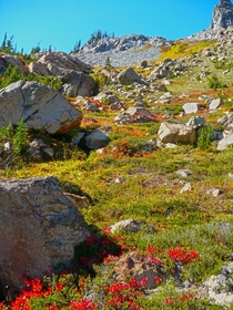 Wildflowers and Boulders in the Cascade Mountains Washington