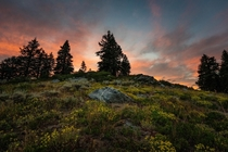 Wildflowers and pink sky on Mount Ashland OR