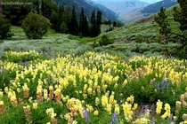 Wildflowers and Rainy Landscape in Sun Valley Idaho