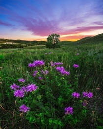 Wildflowers and sunset in Saskatchewan Canada
