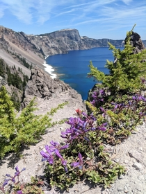 Wildflowers at Crater Lake National Park   x