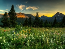 Wildflowers at Glacier National Park  photo by Beau Rogers