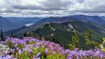 Wildflowers at Goats Peak near Mt Rainier National Park