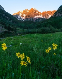 Wildflowers at Maroon Bells Colorado