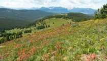 Wildflowers at Shrine Pass CO  Album in comments