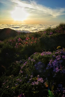 Wildflowers atop Marys Peak in the coastal range of Oregon