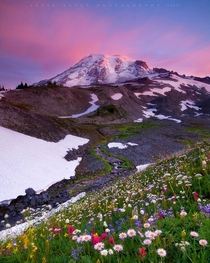 Wildflowers blooming at Washingtons Mount Rainier National Park
