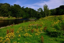Wildflowers by the River Eden a bloody lovely summers day Wetheral Cumbria England