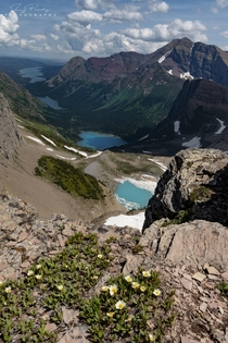 Wildflowers glaciers and Alpine lakes from the vantage point of Grinnell overlook elevation ft in Glacier National Park