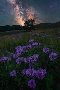 Wildflowers hills trees and milky way Maybe south Saskatchewan isnt as boring as advertised