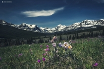Wildflowers in Glacier National Park Montana  by Matt Mateiescu