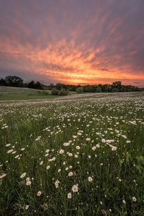 Wildflowers in Nebraska
