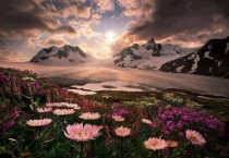 Wildflowers of Alaska