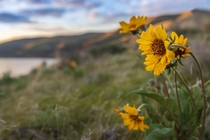 Wildflowers on the Palouse