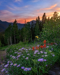 Wildflowers outside Crested Butte Colorado