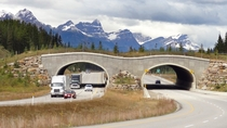 Wildlife overpass in Banff National Park Canada