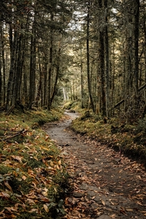 Winding forest trail in the Adirondacks