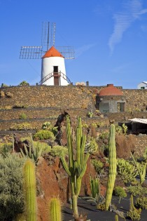 Windmill in Lanzarote Canary Islands Spain