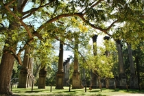 Windsor Ruins Claiborne County Mississippi