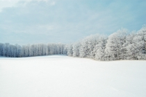 Winter Forest Near Toronto Canada