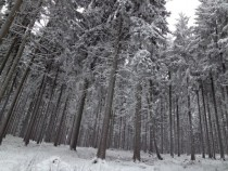 Winter in a hessian forest
