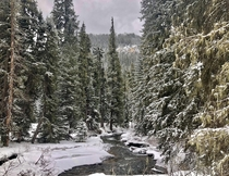 Winter in Spearfish Canyon SD